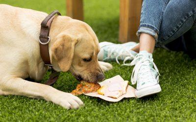 Poden els gats i gossos menjar com les persones?